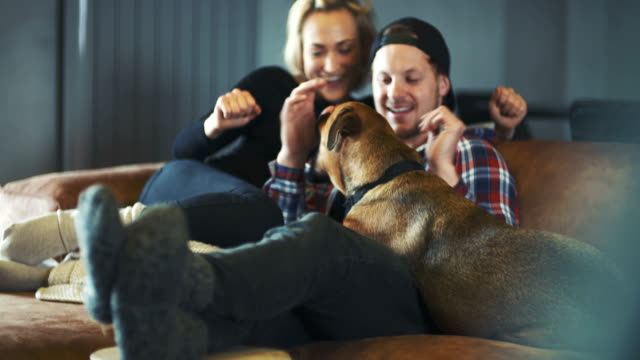 Man Having Fun With Dog At Home
