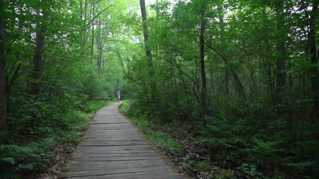 vídeos de stock e filmes b-roll de man hiking in ottawa - man admires forest