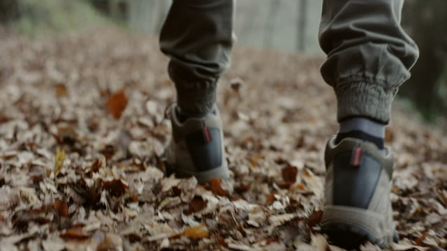 Man hiking on a forest trail - Vidéo