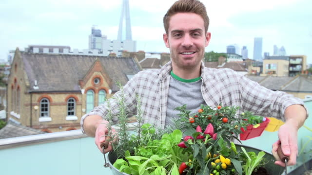 Man Holding Container Of Plants On Rooftop Garden video