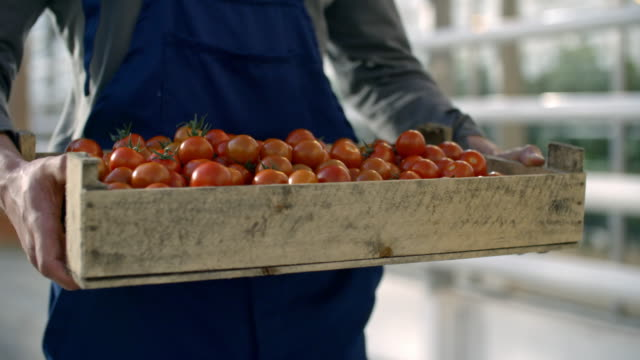 Man Holding Crate with Tomatoes PAN of unrecognizable man in blue overalls holding wooden crate with fresh tomatoes hydroponics stock videos & royalty-free footage