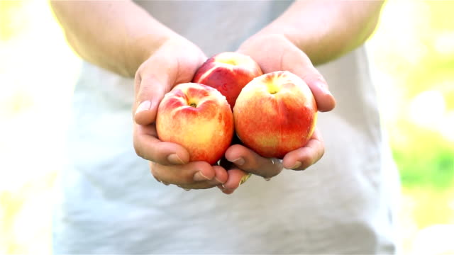 Man holds Peach in the palms of his hands - Slow Motion