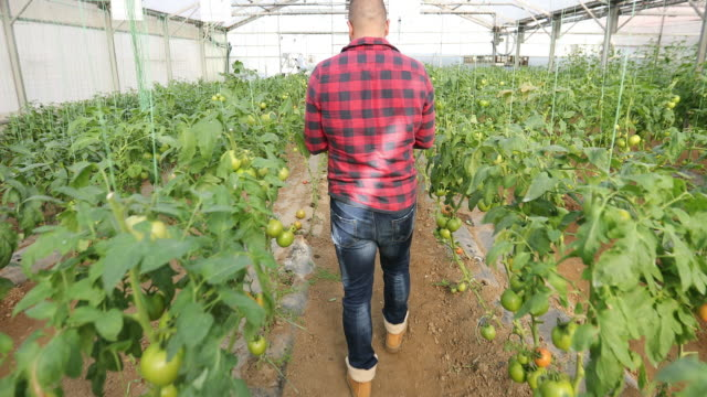 Man in a organic farm video