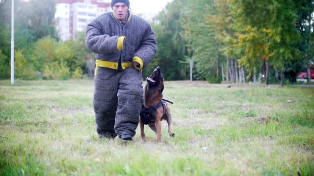 Man in a protective suit trains his shepherd dog to attack video