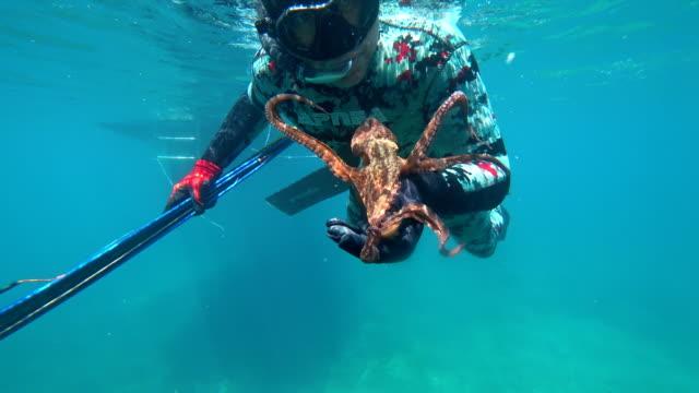 vídeos y material grabado en eventos de stock de hombre en traje cazador bajo el agua atrapado pulpo - buceo con equipo