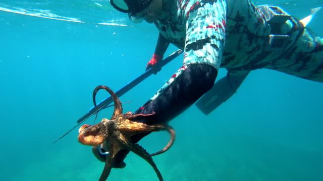 mann im anzug unterwasserjäger gefangen oktopus - sporttauchen stock-videos und b-roll-filmmaterial