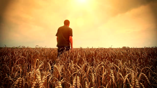 Man in a wheat field video