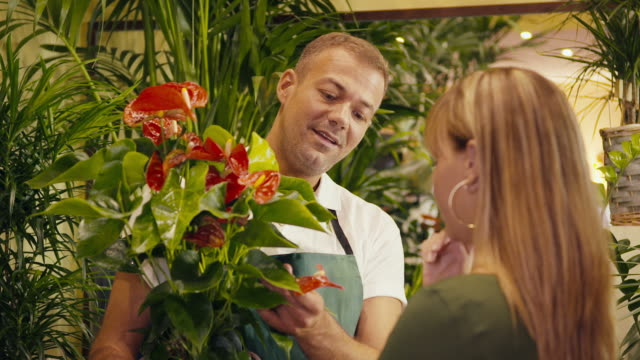 man in flower shop selling plant to customer video