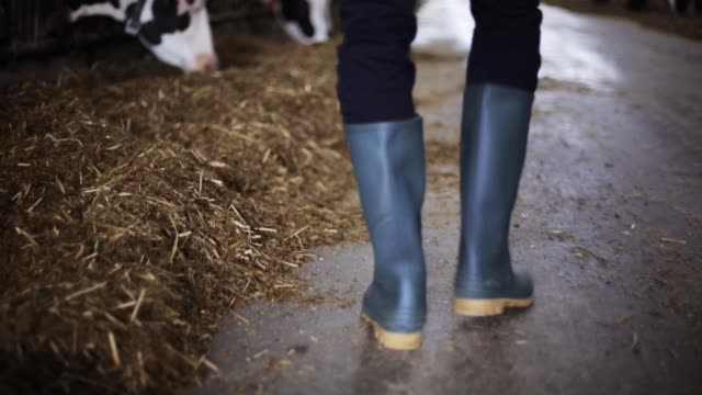 man in gumboots walking along cowshed on farm - dairy stock videos and b-roll footage