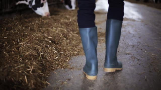 農場の牛舎を歩いて長靴の男 ビデオ