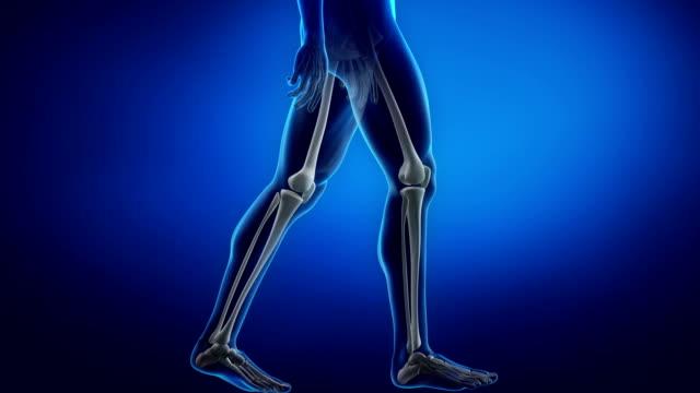 vídeos de stock, filmes e b-roll de homem em movimento focada no joelho - articulação humana