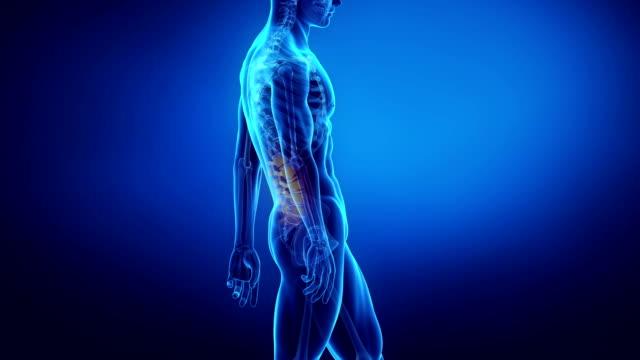 vídeos y material grabado en eventos de stock de hombre en la propuesta se centra en la columna - espalda partes del cuerpo