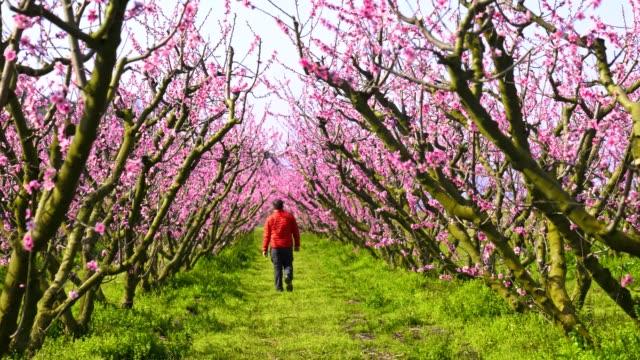 man in red coat walking among peach flowers