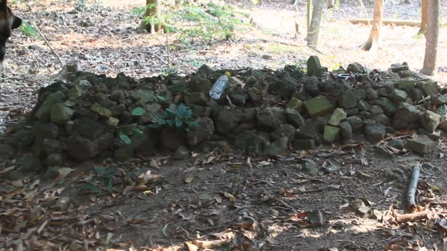 man in rock tomb man in rock tomb old ruin stock videos & royalty-free footage