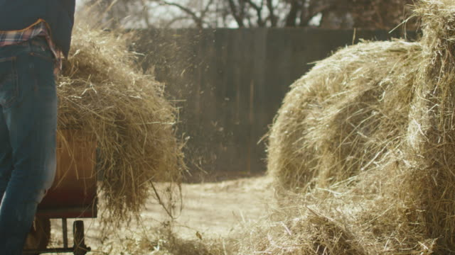 man is cleaning a farm yard from hay with a pitchfork on a sunny day. - paglia video stock e b–roll