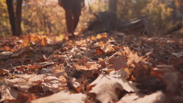 man is stepping on ground in autumn forest, kicking foliage, close-up of feet - fare un passo video stock e b–roll