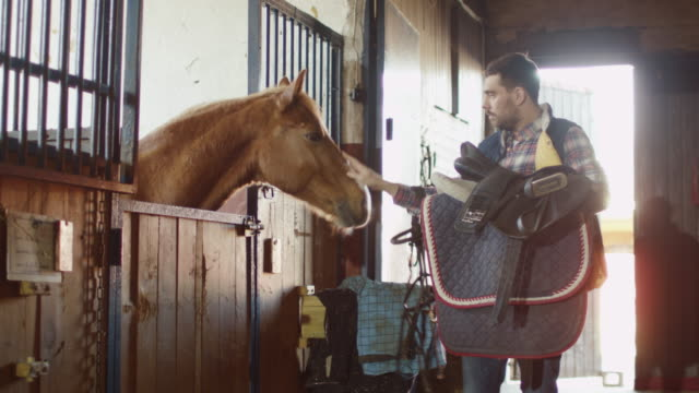 man is stroking a horse in stable while holding a saddle. - sella video stock e b–roll