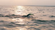 istock A man is swimming breaststroke through the sea 1272412242