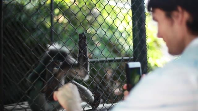 vidéos et rushes de homme prend une photo avec le smartphone d'un petit singe mignon de manger au zoo. 1920 x 1080 - zoo
