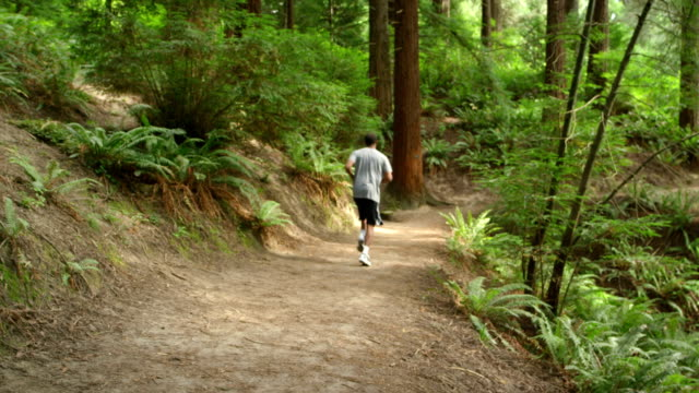 Man jogs down forest path video