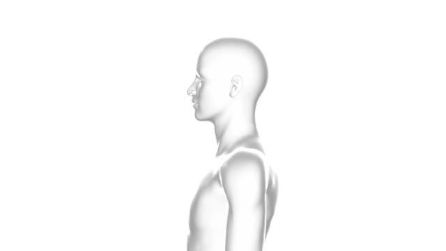 Man, Male Human Body, 3D Model, Seamless Loop