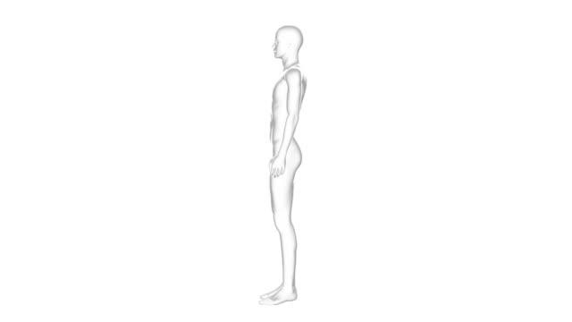 Man, Male Human Body, 3D Wireframe Model, Seamless