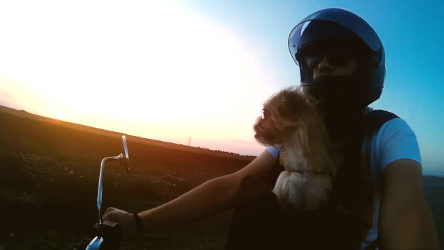 Man Motorcyclist with Dog in sunset HD 1920x1080 / 29.97p / Photo-JPEG / Real Time / Wearable camera crash helmet stock videos & royalty-free footage