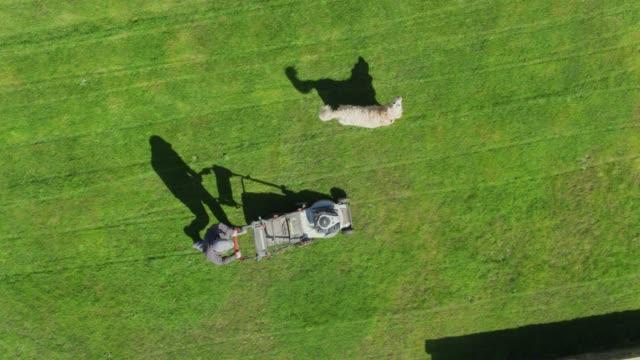 mann, rasen zu mähen, mit dem hund anschauen - top-down drohne schuss - gärtnerisch gestaltet stock-videos und b-roll-filmmaterial