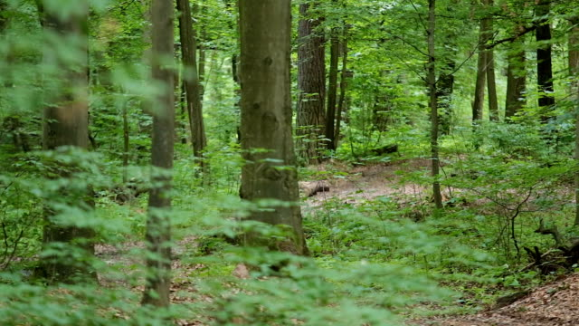 man on bycicle comes closer in forest - percorso per bicicletta video stock e b–roll