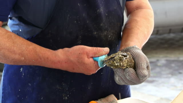 Man opening fresh oysters at market close up video