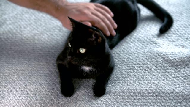 Man petting his black cat