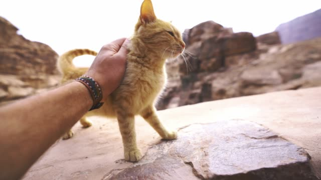 man petting kitten near petra - лапа стоковые видео и кадры b-roll