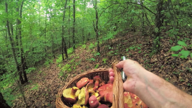 Man picking wild mushrooms in the forest. Computer game-like personal point of view. video
