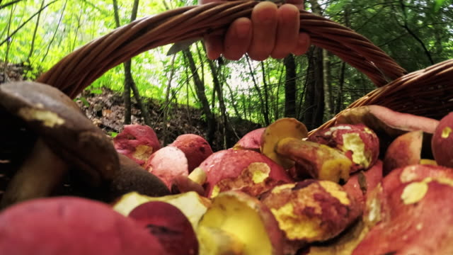mannen plocka svamp i skogen. dator spel-liknande personlig synvinkel. - höst plocka svamp bildbanksvideor och videomaterial från bakom kulisserna
