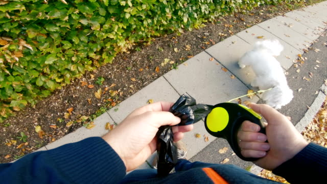 man picks up dog poo after his pet on sidewalk - podnosić filmów i materiałów b-roll