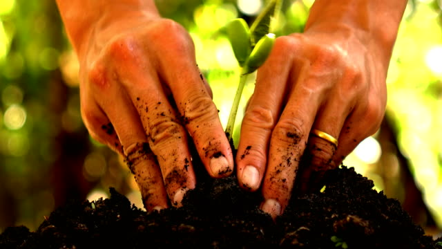 man planting young tree 4k man planting young tree planting stock videos & royalty-free footage