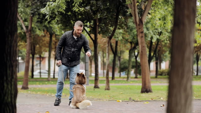 Man playing with his dog husky, teases her in park at the autumn day, slow motion video