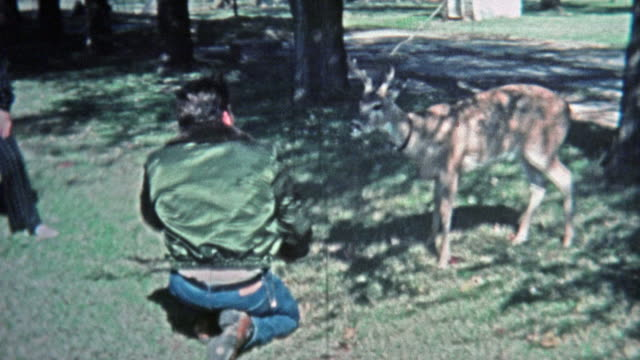 1971: Man playing with young pet whitetail male deer. video