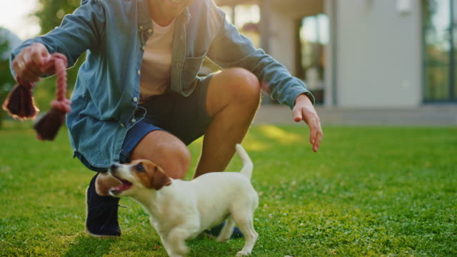 Man Plays with His Jack Russell Terrier Dog Outdoors. He Pets, Trains, Teases His Puppy with Favourite Toy. Idyllic Summer House. Golden Hour Down Time. Low Ground Knee Slow Motion Camera Shot