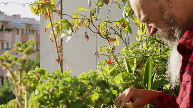 Man pulling off dry leaves from flower plants video