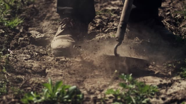 Man Removes Weeds. Weed Removal. Man Works With A Hoe. Worker Loosens The Soil. weeding stock videos & royalty-free footage