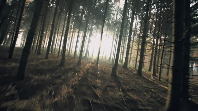 POV Man loopt voor zijn leven in het bos video