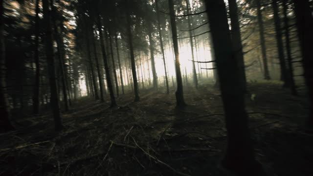 POV Man loopt in een donker bos video