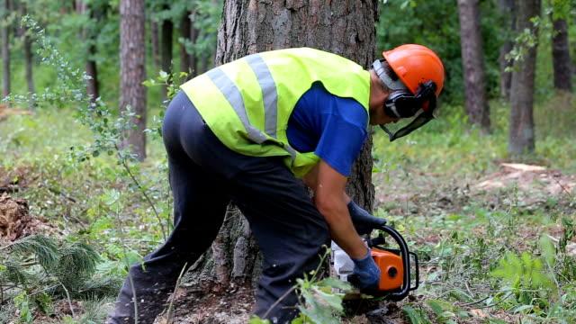 man såga trä med motorsåg - pine forest sweden bildbanksvideor och videomaterial från bakom kulisserna