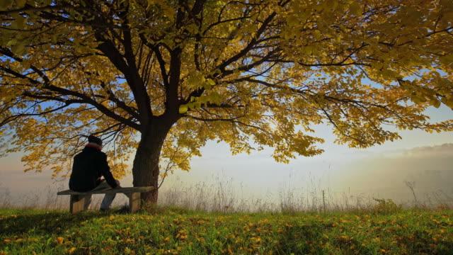 男性のベンチに座るの秋の木 - ベンチ点の映像素材/bロール