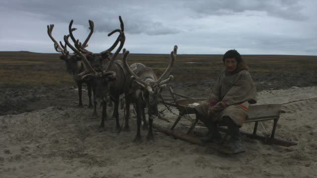 A man sitting on a reindeer sleigh. Tundra. Summer Nenets sits on a reindeer sleigh. Tundra. Summer minority groups stock videos & royalty-free footage