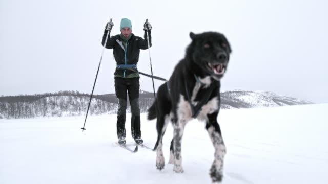 slo mo man skijoring in norway - fiordi video stock e b–roll