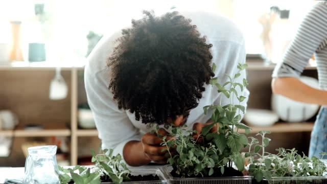 Man smelling fresh oregano at home Man smelling fresh oregano at home vegetable garden stock videos & royalty-free footage