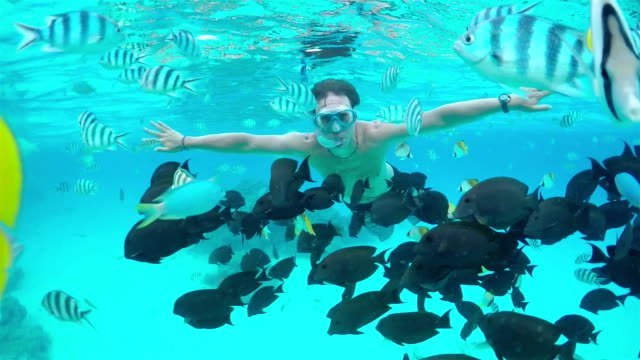 SLOW MOTION UNDERWATER: Man snorkeling exotic reef with tropical fish video