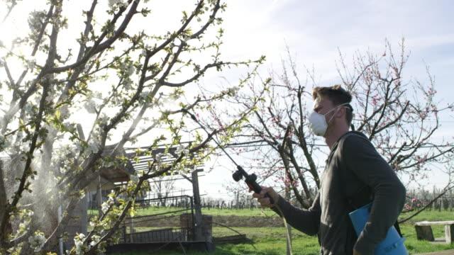 man spraying pesticides over a fruit tree - insetticida video stock e b–roll